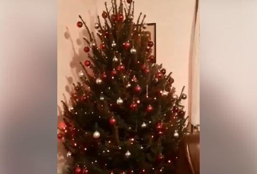 Ovaj božićni bor iz Imotskog hit je na društvenim mrežama