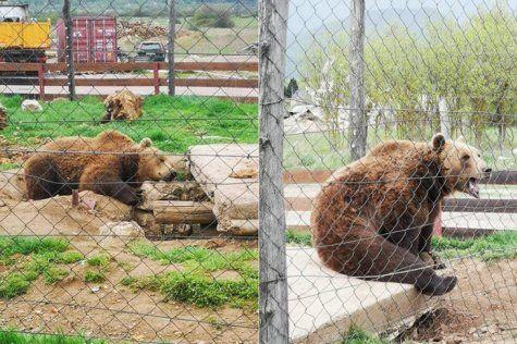 Macola bi mogao ostati bez svoja dva medvjeda Brunde i Mrkog