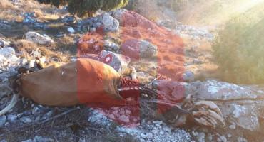 UZNEMIRUJUĆE FOTOGRAFIJE Na brdu Fortica iznad Mostara pronađeni životinjski ostaci