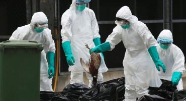 STRAH OD PTIČJE GRIPE U Hrvatsku uvezeno 5,5 tona sumnjivog mesa, uklonjen tek mali dio