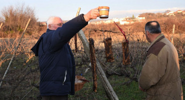 VINCEKOVO U Čitluku obilježen početak rezidbe vinove loze