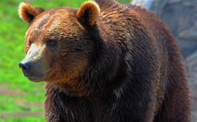 Medvjedi u Pionirskoj dolini nisu u zimskom snu