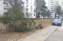 Tijekom noći jak vjetar iz zemlje iščupao drvo u Ulici hrvatske mladeži