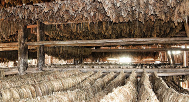 Hercegovački duhan četvrti zaštićeni bh. proizvod na svjetskoj listi