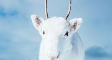 Jeste ikada vidjeli bijelog soba? Pogledajte ove fotografije!