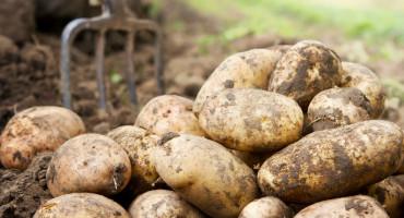 MOŽETE OBRAĐIVATI NJIVE Na razini Federacije dopuštena poljoprivredna djelatnost