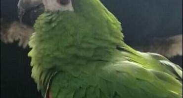 NAGRADA 1000 MARAKA Na području Mostara nestala ptica