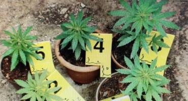 PRETRESI U LJUBUŠKOM Pronađene granate, marihuana, streljivo