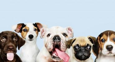 Otvorene prijave za Izložbu pasa u Širokom Brijegu