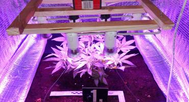 Policija kod Ljubušaka pronašla laboratorij za uzgoj marihuane i veći iznos novca