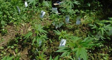 Mostarac uhićen zbog marihuane u Slipčićima