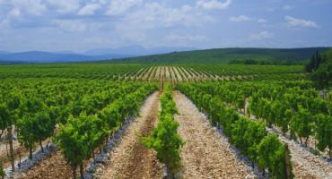 BROĆANSKI VINOGRADARI U PROBLEMIMA Prinos grožđa dobar, ali loše ide, lanjske zalihe vina ogromne