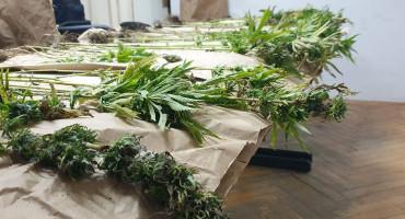 JOŠ JEDNA U HERCEGOVINI  Pronađena plantaža marihuane
