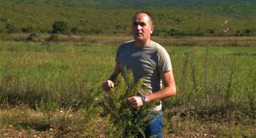 PETAR MIHIĆ Zbog slatkog pelina preko noći postao najtraženija osoba u Hercegovini