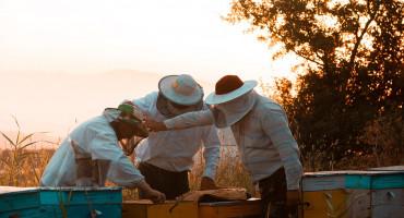 Za kilogram hercegovačkog pčelinjeg otrova morate izdvojiti i do 20 tisuća eura!