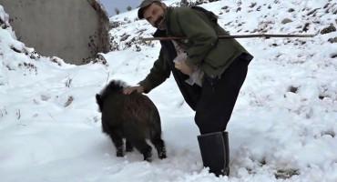 NEOBIČNI LJUBIMAC Hercegovac udomaćio divljeg vepra