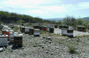 HERCEGOVAČKI MED Zbog nestašice cijena meda skočila na 20 maraka, i ova godina pčelarima loše krenula