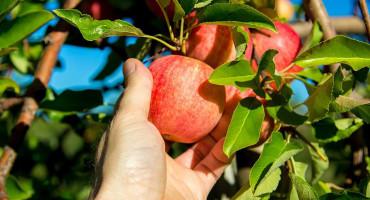 POMAK Breskve i jabuke iz BiH idu u Rusiju