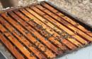 Hercegovački pčelari dobivaju račune od 400 maraka za pašu pčela