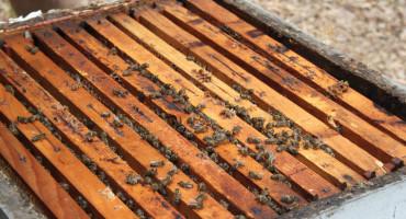 MEDA NEMA NI ZA LIJEKA Cijena mu ide na čak 40 maraka, pčelari u problemima