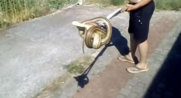 Žena iz Ljubuškog u vlastitoj kuhinji zatekla ogromnu zmiju