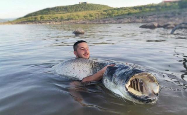 BORBA OD 90 MINUTA Hercegovac ulovio soma od 60 kilograma