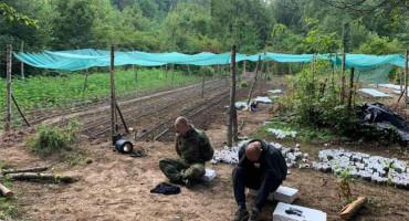 Prijedlog za pritvor zbog 6000 stabljika konoplje uz granicu sa Hrvatskom