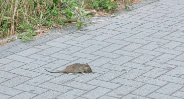 MOSTARSKA IDILA Kad miševi vole sladoled i dvorane