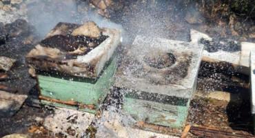 DRAMATIČAN APEL HERCEGOVAČKIH PČELARA Najteža godina u povijesti pčelarstva, potrebna pomoć u vidu hrane i lijekova