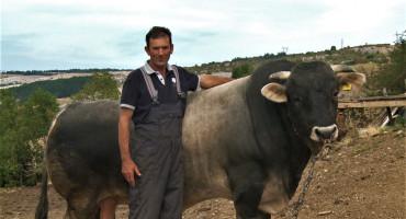 Mala općina u Hercegovini pruža sve mogućnosti za uzgoj bikova