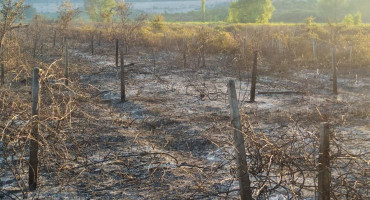 LJUBUŠKI Izgorio veći dio polja Jezerac