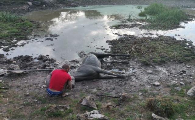 GSS kod Livna spasio kobilu iz blatne lokve