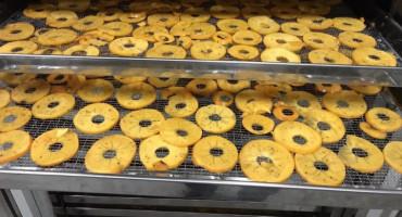NOS ZA BIZNIS Čapljinci proizvode čips od japanske jabuke - kaki